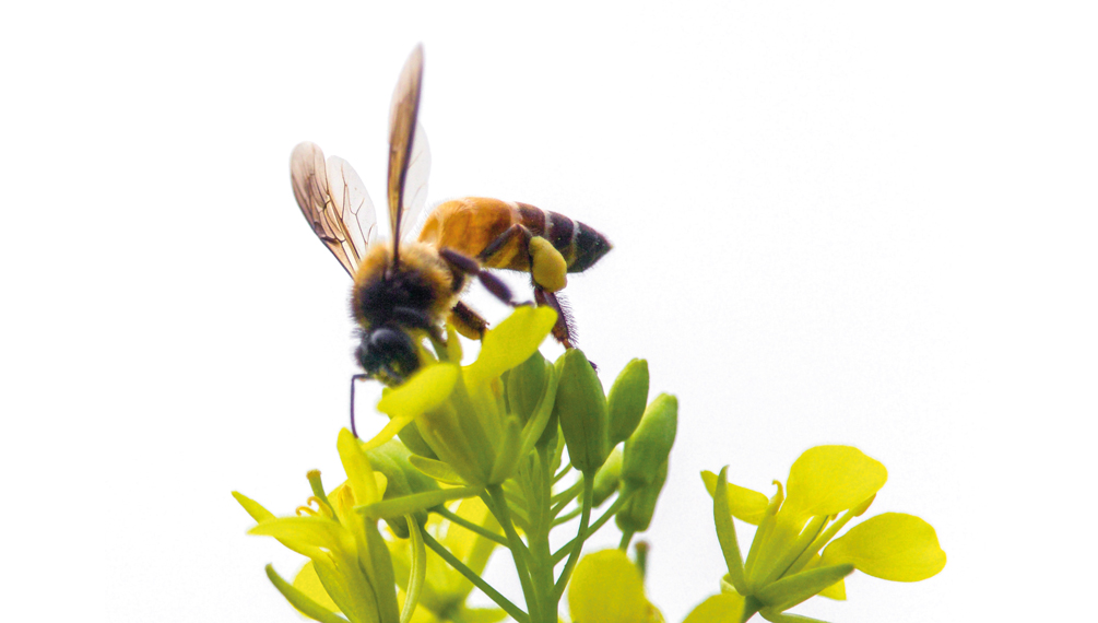 un'ambiente per l'ape